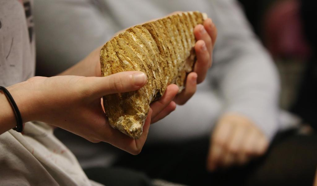 Image: A person holding a mammoth tooth